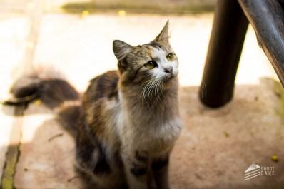 A Kitty at Waikiki