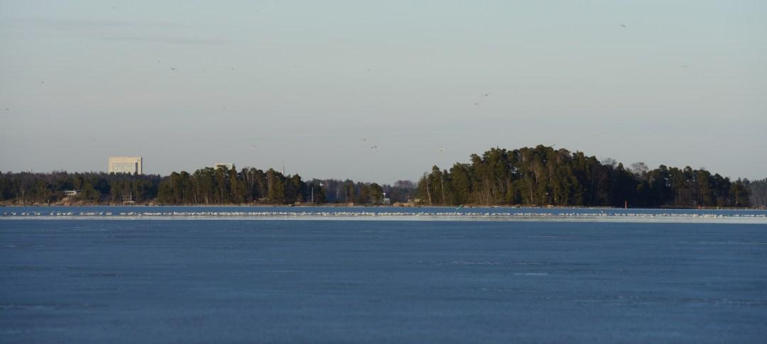 No mitäs pientä jäälohkaretta jään ja meren rannalle on kertynyt? Ei mitään. Siellä odotti järjetön parvi lokkeja, jotka suunnittelivat kovaan ääneen muuttoa laitureille, veneiden katoille ja lähiluodoille.