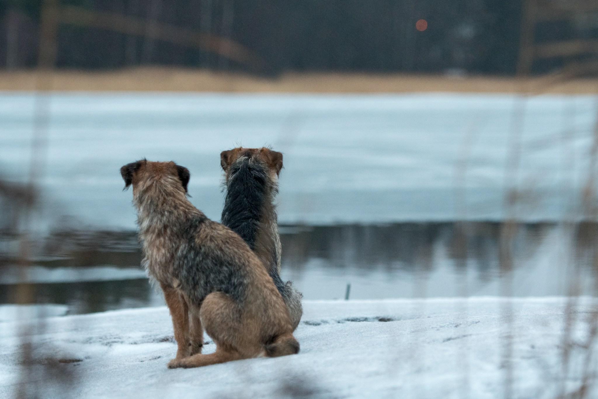 Sompaa ja Pipoa harmitti, mutta tottelivat kuitenkin, eivätkä rynnänneet jäälle.