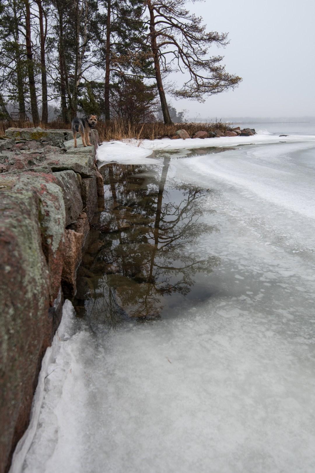 Rannoilla on aukkoja, joissa jäätä ei enää ole.