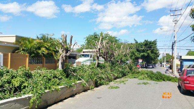 Corte árboles en la Sánchez