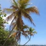 thumb_palmtrees