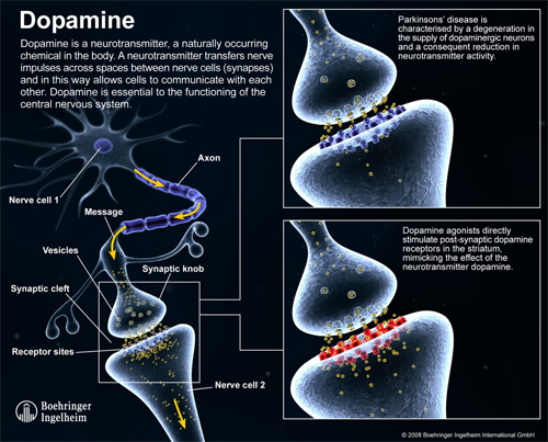 What is dopamine and it's relation with parkinson disease image