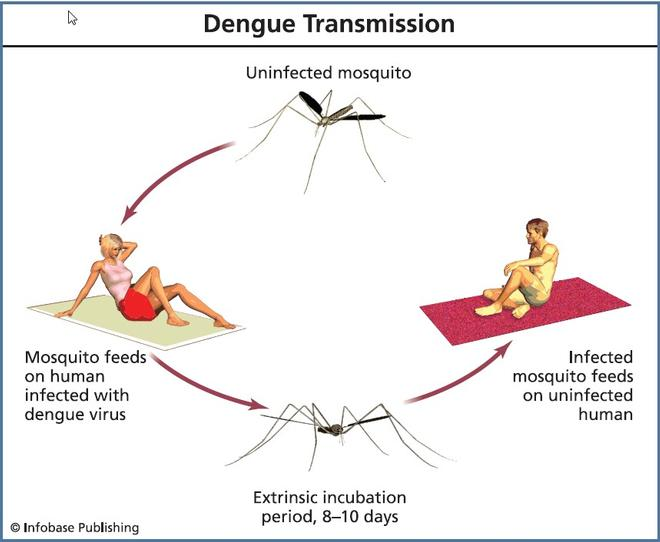 causes of dengue fever