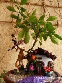 Bonchi - Bonsai de Pimenta Murupi