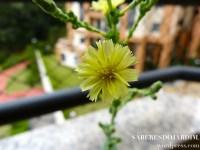 Horta - Alface Regina