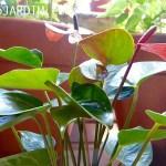 Como Plantar Mudas