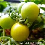 Catálogo de Tomates