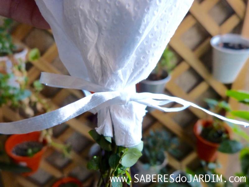 Como Secar Ervas e Temperos