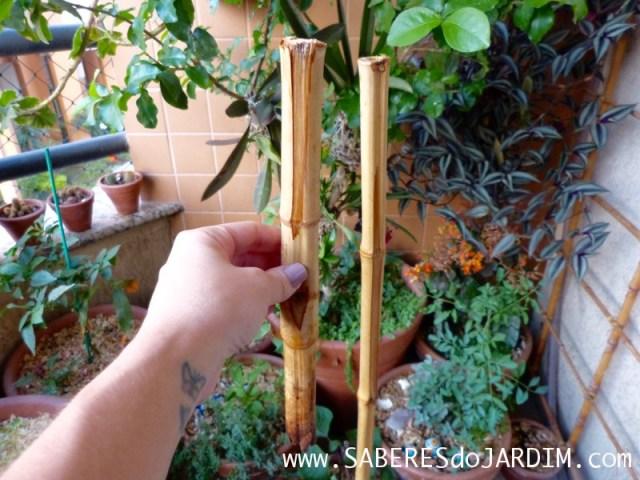 Comedouro para Pássaros - Faça Você Mesmo - DIY