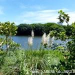 Caçadora de Plantas – Dia de Identificar Espécies e Colher Sementes