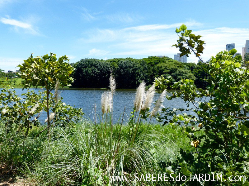Caçadora de Plantas - Identificar Espécies e Coletar Sementes- Parque