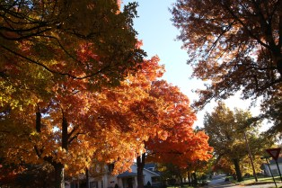 Fall Color.7226