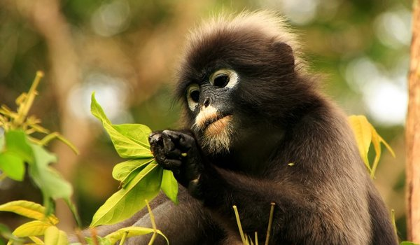 Rare 'leaf monkeys' sighted in China