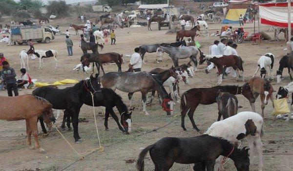Chitrakoot donkey fair 2018