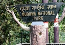 Lakhimpur Kheri : Dudhwa National Park opens for tourists
