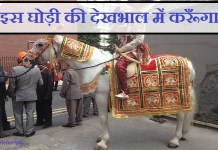 horse lover india ajmer