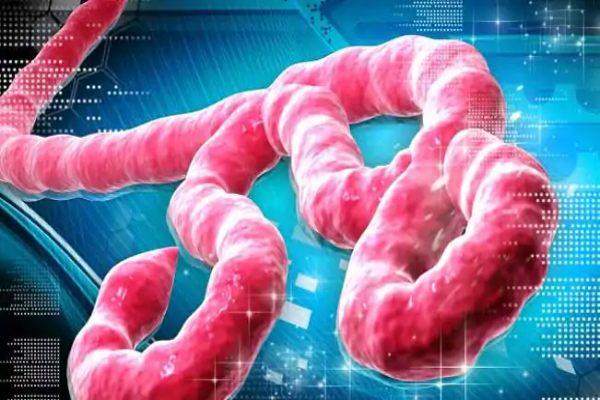 भारत में इबोला वायरस फैलने के आसार, ICMR और NCDC ने जारी की चेतावनी