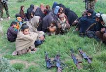 229 terrorists surrender in Afghanistan
