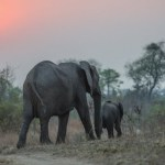 Sabi Sabi Private Game Reserve Elephants By Sunset