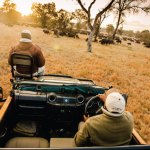 Sabi Sabi Private Game Reserve Game Drive