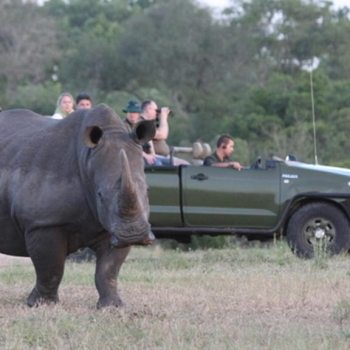 Nkorho Bush Lodge Accommodation Activities Rhino