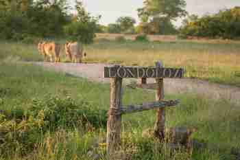 Londolozi Varty Camp Entrance Sign