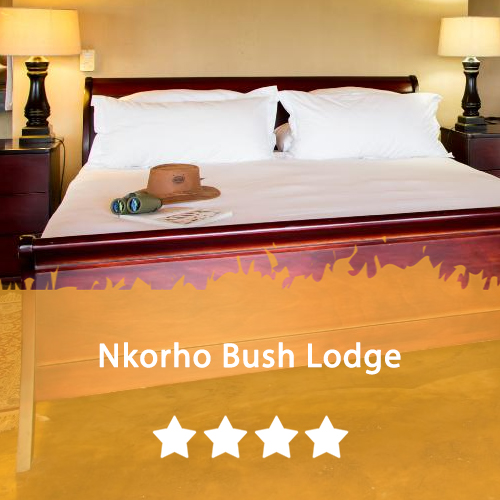 Nkorho Bush Lodge Featured Image