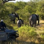 Lion Sands Treehouses Game Drive Elephant Herd