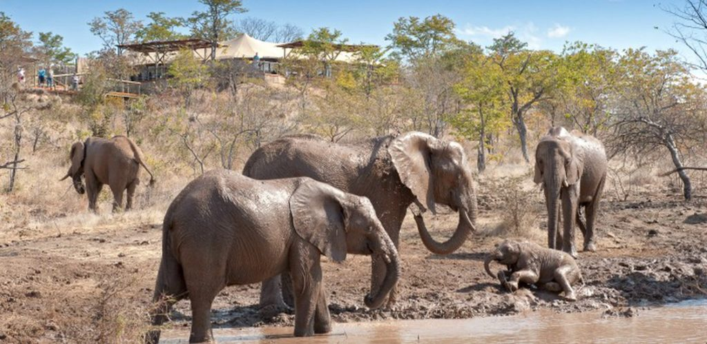 9 day big five safari and victoria falls tour