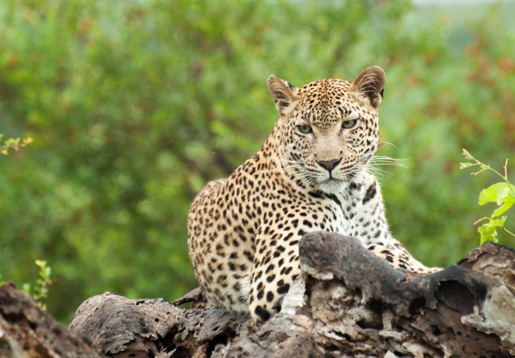 3 Day Kruger Park & Sabi Sands Safari Experience - From R9330 per/person