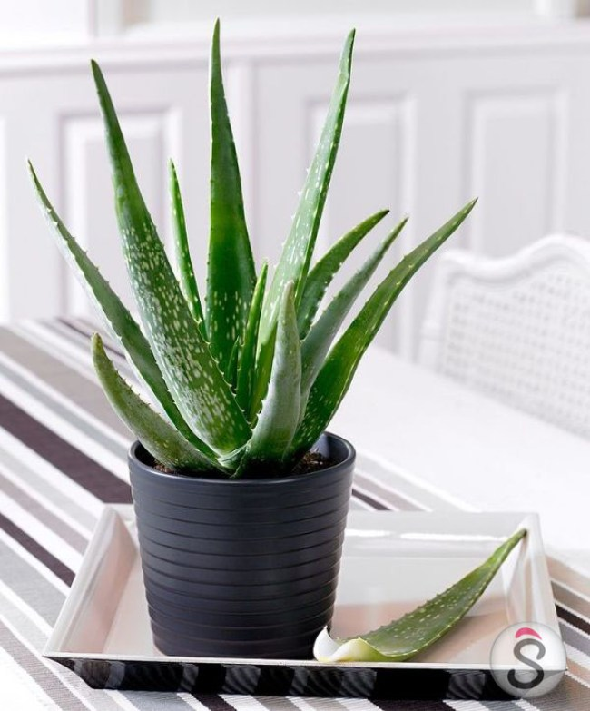 how-to-look-for-plants-in-your-living-room