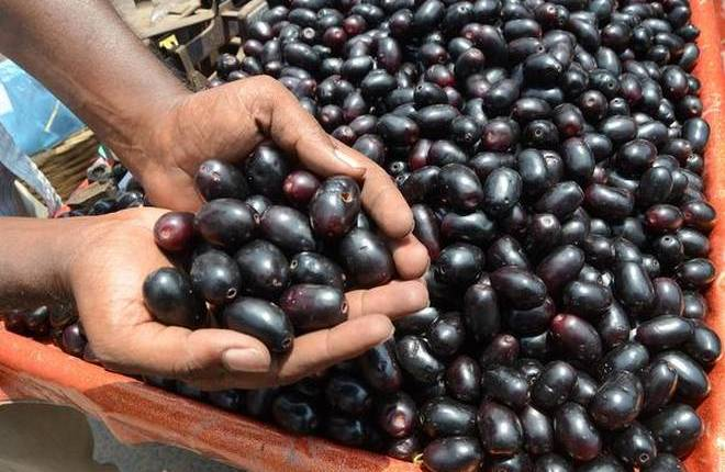 Due to the eating of jamun, these three diseases are eliminated from the root (2)