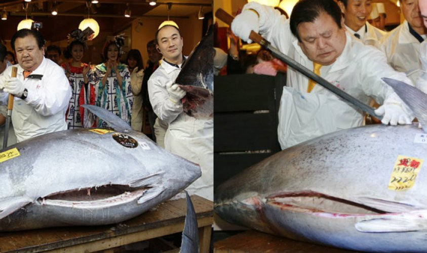 1.8 million dollars is sold this Kohaku Koi fish