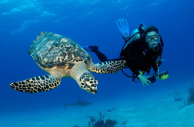 10 Fun Facts for Scuba Diving in Hindi