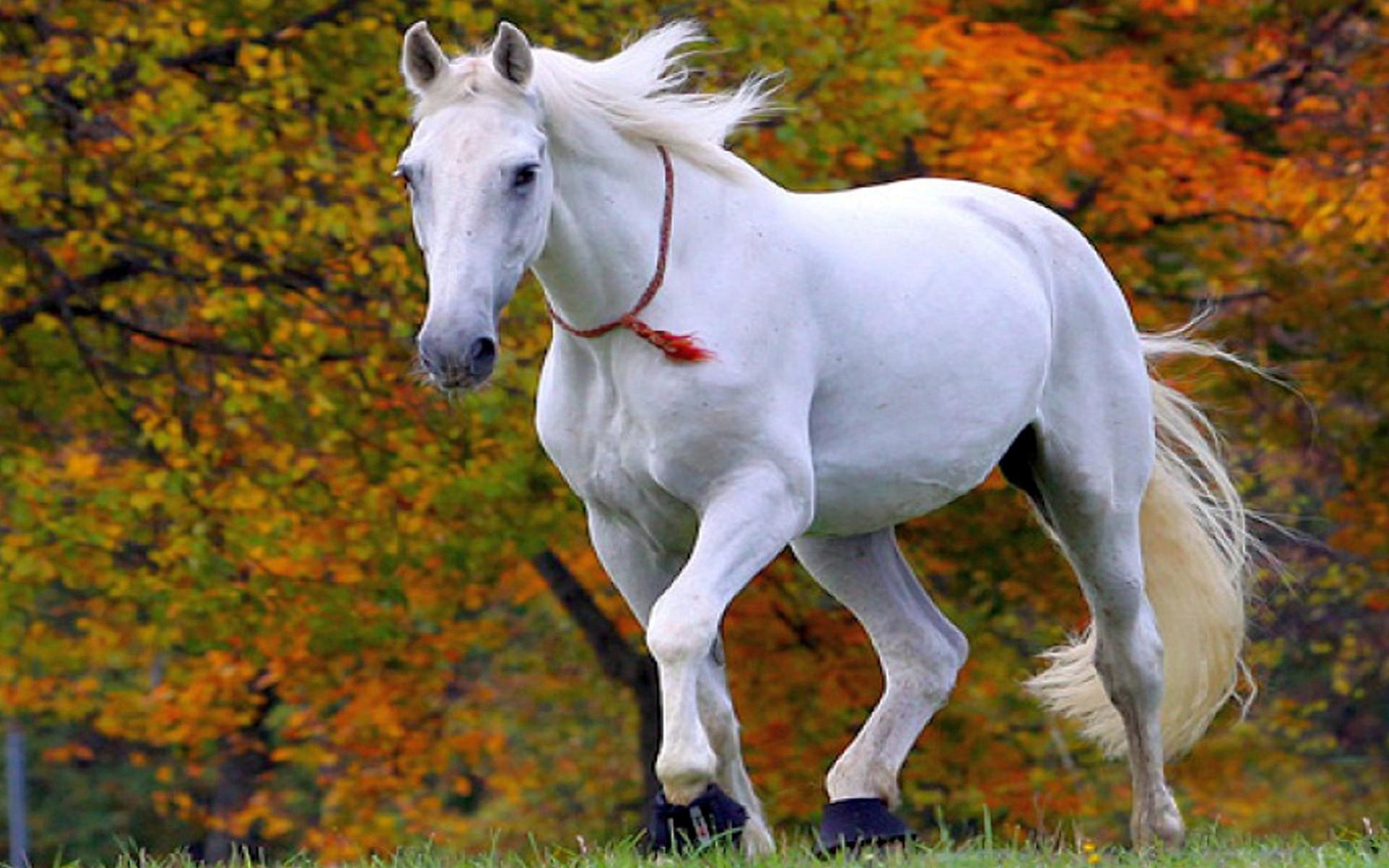 22 जुलाई को सफेद घोड़े से भी तेज दौड़ेगा इन राशियों का नसीब, पलट जाएगी 6  राशियों की तकदीर - Sabkuchgyan