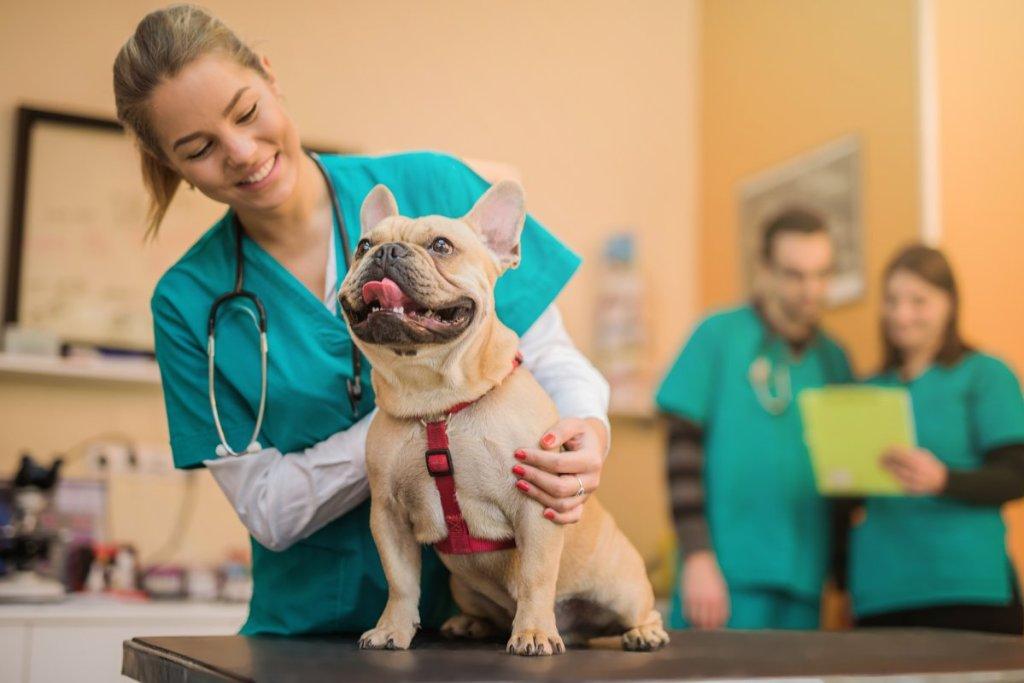 Easiest Veterinary (Vet) Schools to Get Into