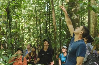 International Tropical Timber Organisation Fellowship