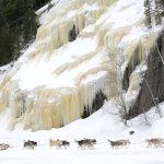 Traîneau à chien, une des nombreuses activités d'hiver offertes à l'hôtel Sacacomie.