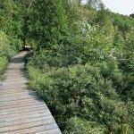 Chemin de bois derrière la plage de l'hôtel Sacacomie à St-Alexis-des-Monts. Chemin qui mène à l'un des nombreux sentiers de la forêt autour de l'hôtel Sacacomie.