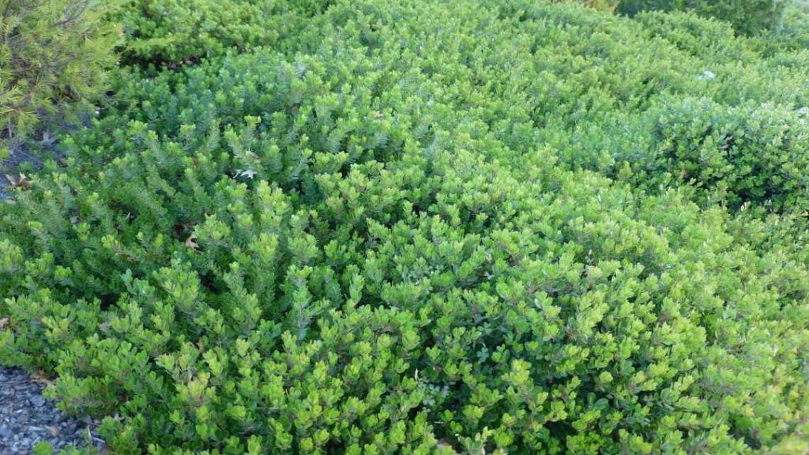 Finding the best ground cover for the weather  The