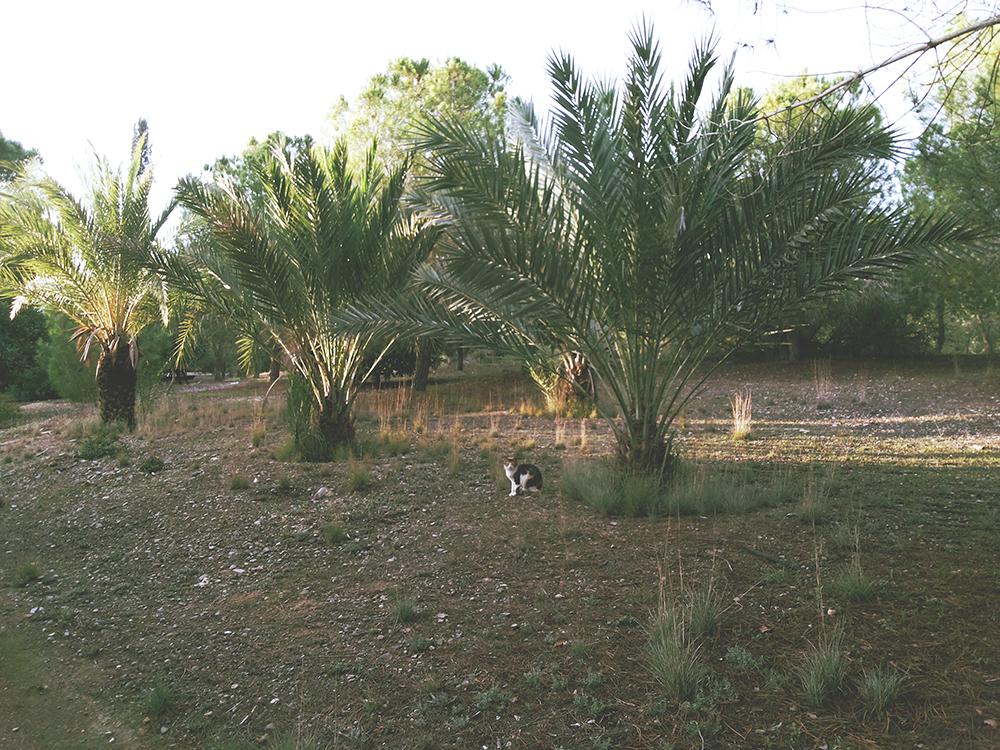 Nicosia Cyprus Athalassa Park Cat
