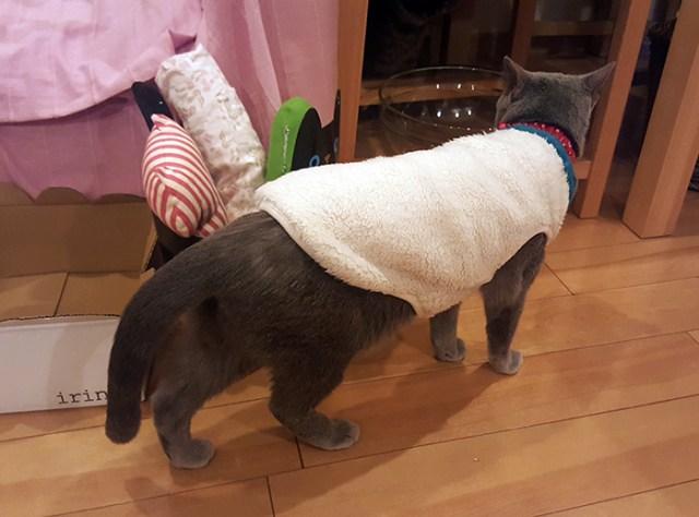 dressed cat cat cafe tokyo