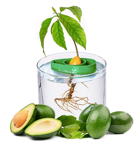 Uncommon Goods_Valentine's Day Gifts_avocado tree starter kit