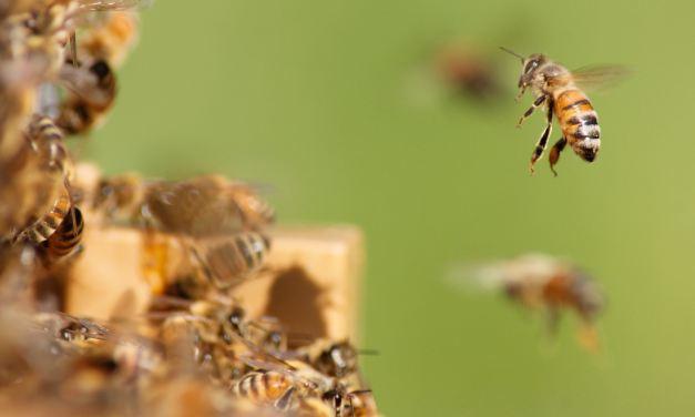 Bee Sporty!