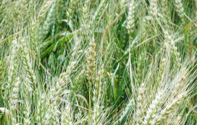 industrie Agro alimentaire Saci Technology