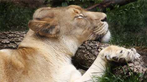 A Wild Sleepover: Family Overnights at the Sacramento Zoo