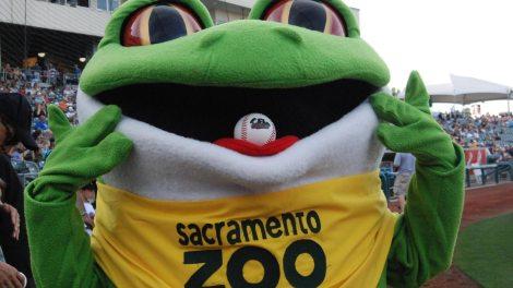 The Sacramento River Cats are Going Wild with the Sacramento Zoo