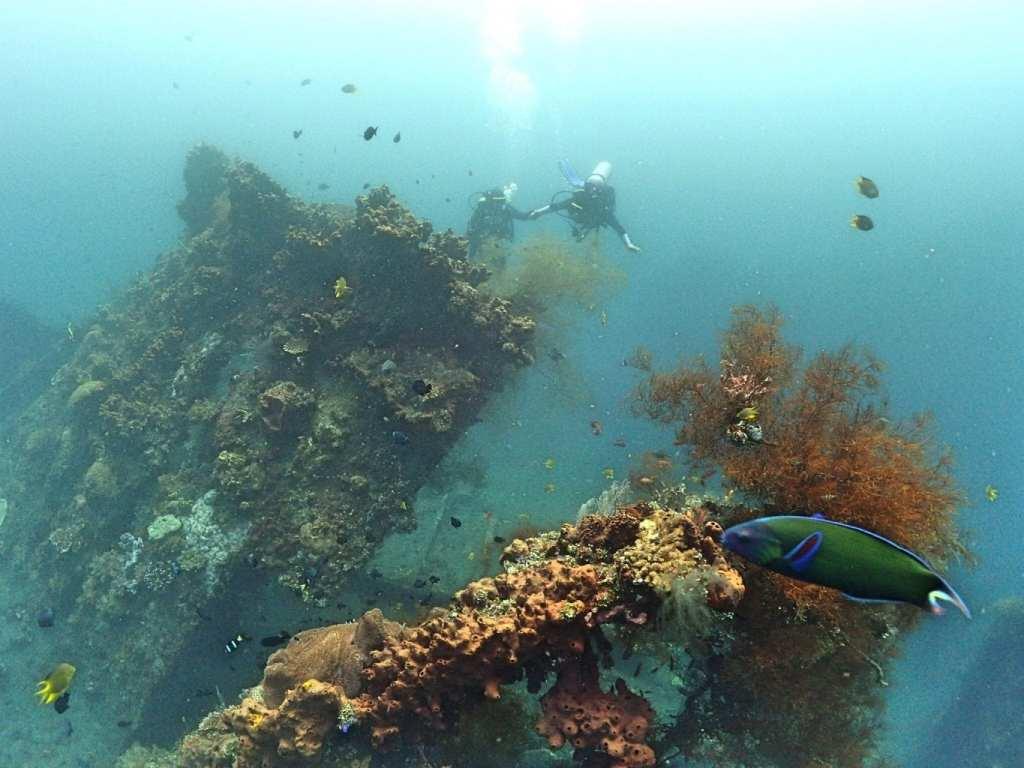 corals diving