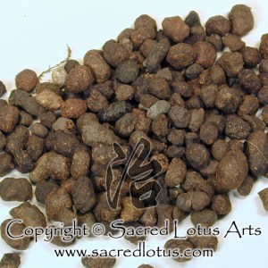 Chinese Herb: Wu Ling Zhi (Flying Squirrel Feces), Feces